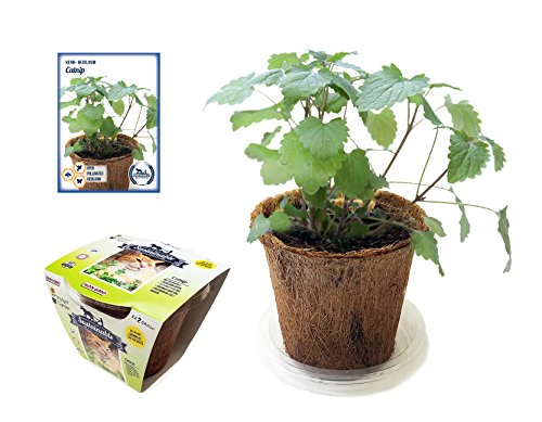 - Grow Your Own Catnip, All-In-One Catnip Growing Kit, Complete Kit with Catnip Seeds, Coconut Fiber Pot and Soil Disk - Just Add Water (Catnip Kit)