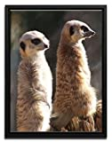 Wanted Art Ready to Hang Framed Canvas Wall Art 38 x 50 Meerkat At the Manor Africa Savannah