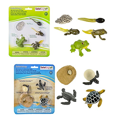 Safari Ltd Life Cycle of a Green Sea Turtle with Safari Ltd Life Cycle of a (Life Cycle Of A Frog For Kids)