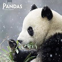 Pandas 2019 Square Wall Calendar