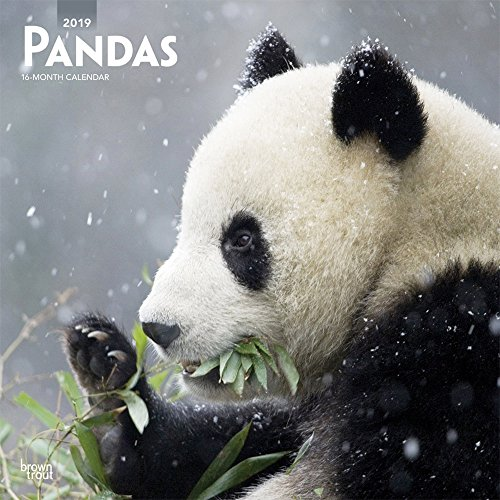 Pandas 2019 12 x 12 Inch Monthly Square Wall Calendar, Wildlife Zoo Animals Bears (Multilingual Edition)