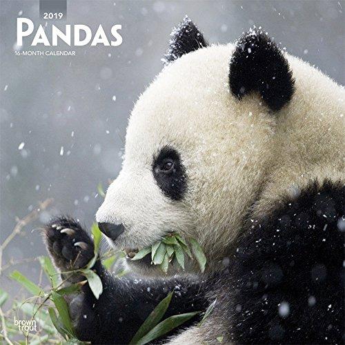 Pandas 2019 12 x 12 Inch Monthly Square Wall Calendar, Wildlife Zoo Animals Bears (Multilingual Edition) (Bear Calendar)