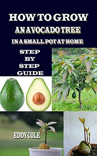 How To Grow An Avocado Tree In Small Pot At Home Step By Step Guide