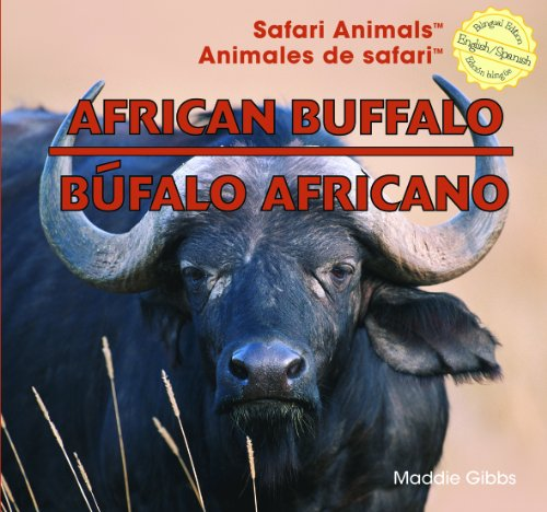 African Buffalo (Safari Animals) - African Buffalo