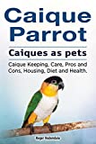 Caique parrots as pets. Caique Keeping, Care, Housing, Pros and Cons, Health and Diet. Caique parrot owners manual.