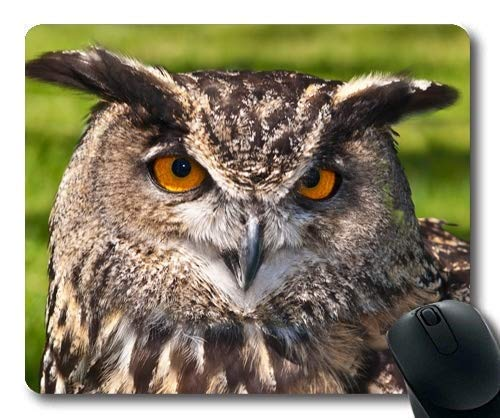 Mouse mat,a owl Food Chain Indische Oder auch Hindu Halsband Eule 1,Mouse Pad with Stitched Edges ()