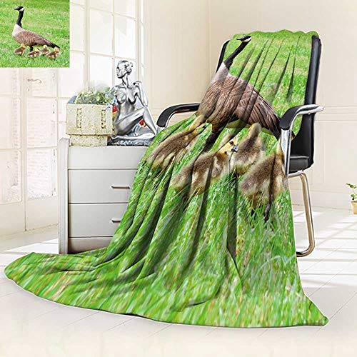 YOYI-HOME Digital Printing Duplex Printed Blanket Canadian Goose and her goslings During Spring Summer Quilt Comforter/31.5