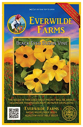 (Everwilde Farms - 100 Black-Eyed Susan Vine Wildflower Seeds - Gold Vault Jumbo Seed Packet)