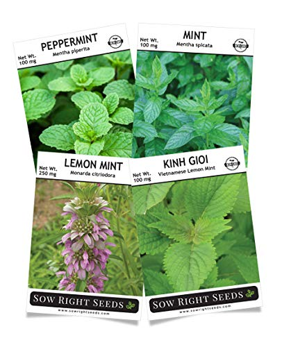 Sow Right Seeds - Mint Garden Seed Collection - Peppermint, Common Mint, Lemon Mint, and Vietnamese Lemon Mint; Non-GMO Heirloom Seeds with Instructions for Starting Indoors or Outdoors; (Best Indoor Plant Seeds)