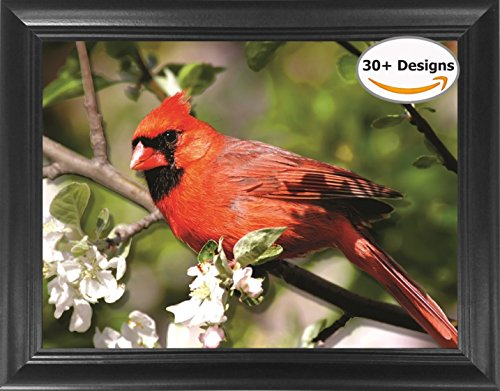 Cardinal Framed 3D Lenticular Picture - Unbelievable Life Like 3D Art Pictures, Lenticular Posters, Cool Art Deco, Unique Wall Art Decor, With Dozens to Choose From! (Pictures Of Cardinals)