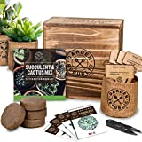 Cactus Succulent Seed Starter Kit - Indoor Garden Grow Kits, Seeds for Planting Mini Cactus Succulent Plants, Plant Markers, Soil, Pots, Wood Box - Gardening Gifts, Terrarium, Cacti Succulents Decor