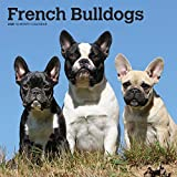 French Bulldogs 2020 12 x 12 Inch Monthly Square Wall Calendar, Animals Dog Breeds French