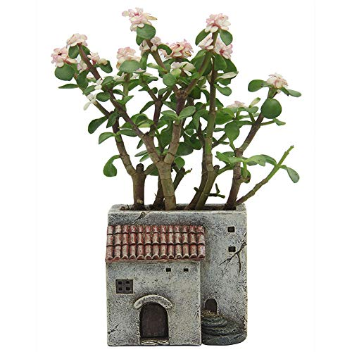 IFUNEYS Flower Pot Succulent Plant Pots Indoor Outdoor with Drainage Hole Village Farmhouse Planters by Amazing Design Cottage Gardens