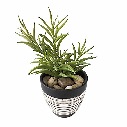 Artificial Succulent in Pot - Plante Grasse Artificielle en Pot