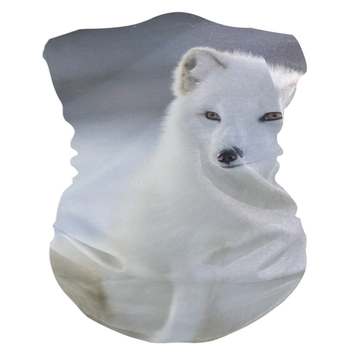 Blancanieves Arctic Fox Bandas elásticas Head Wrap Shawl Deportes Sweatband Mascarilla Bufanda mágica Accesorios para el cabello Bandas Lazos para mujeres ...