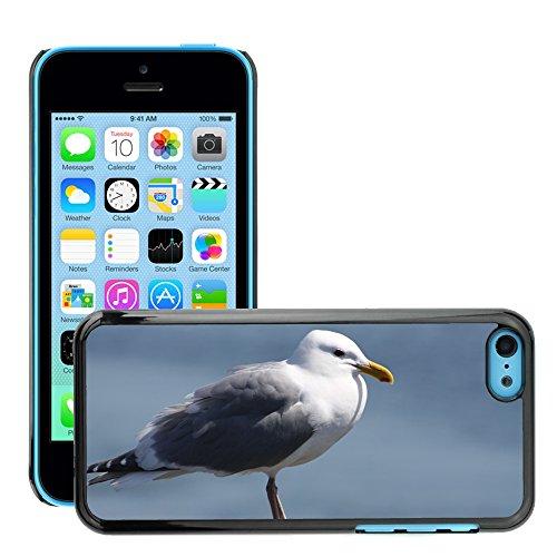 Stampato Modelli Hard plastica Custodie indietro Case Cover pelle protettiva Per // M00421586 Mouette Oiseau Beach Ocean eau Gull // Apple iPhone 5C