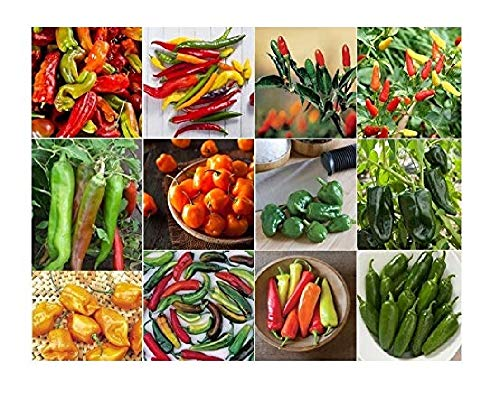 500 Hot Pepper - David's Garden Seeds Collection Set Pepper Hot (Multi) 12 Varieties 500 Seeds (Non-GMO, Open Pollinated, Heirloom, Organic)