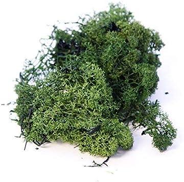 250 Grams Inerra Finlandia Musgo verde oscuro L/íquen de los Renos Manualidades Plantas Potes Flores Pantalla Modelado Verde Oscuro