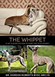 The Whippet: A vet's guide on how to care for your Whippet