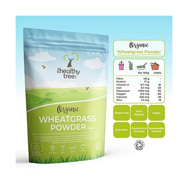 Polvere di Erba di Grano Bio di TheHealthyTree Company - Alto Contenuto di Fibre, Vitamina E, Potassio e Ferro - Pura… 2 spesavip