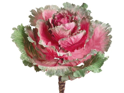 11.5'' Ornamental Cabbage  Cerise Green (pack of 12) by Arcadia Silk Plantation