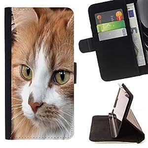 Momo Phone Case / Flip Funda de Cuero Case Cover - Gato Cymric Americano de Pelo Corto Casa; - Sony Xperia M2