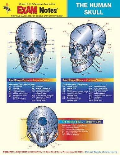 Human Skull Anatomy EXAM Notes (EXAM Notes Reference Charts) -