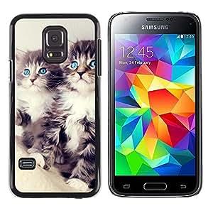 DEMAND-GO ( NO PARA S5) Smartphone Rígido Protección única Imagen Carcasa Funda Tapa Skin Cover Case Para Samsung Galaxy S5 Mini, SM-G800 - blue main coon eyes cute