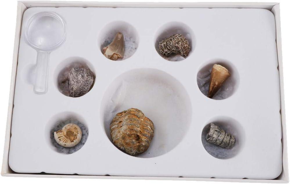 perfeclan 7 Piezas Caja de Muestra de Minerales y Rocas Fósiles Regalo de Cumpleaños Navidad para Entusiastas de Ciencia: Amazon.es: Juguetes y juegos