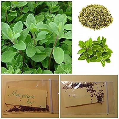 Marjoram ''Origanum Majorana'' ~100+ Top Quality Seeds - Organic Healthy Herb