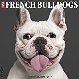 Just French Bulldogs 2017 Wall Calendar (Dog Breed Calendars)