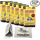 Top Grade Mouse Trap - Non-Toxic, Peanut Butter Scented Sticky Bug, Mouse And Rat Glue Boards - 12 Pack
