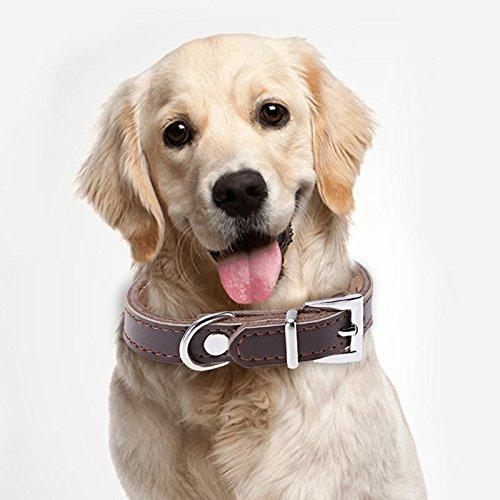 Buy dog flea collar reviews