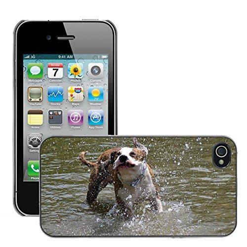 Bild Hart Handy Schwarz Schutz Case Cover Schale Etui // M00135376 Dog amerikanischen Stefford Rennen // Apple iPhone 4 4S 4G