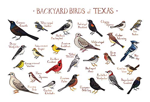 Backyard Birds of Texas Field Guide Art Print ()