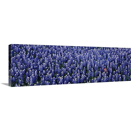Solid-Faced Canvas Print Wall Art Print Entitled Blue Bonnets Texas Hill Country TX 60