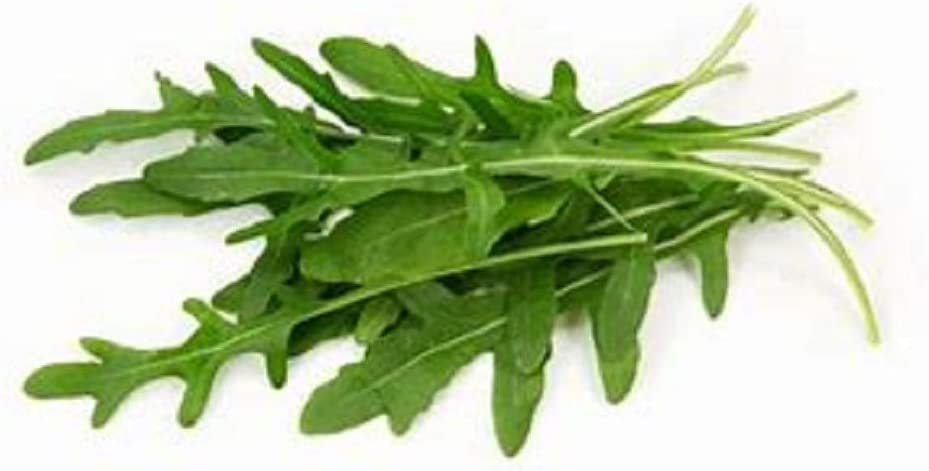 500 Organic Roquette Arugula Seeds Salad Rocket Garden Rocket Salad green USA