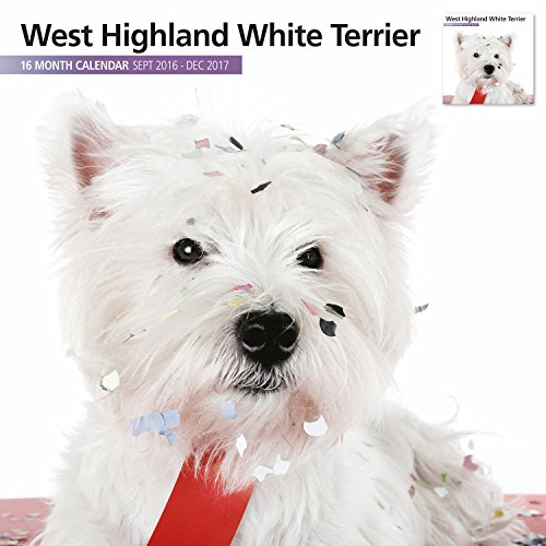 Magnet & Steel 2017 West Highland White Terrier Calendar, Wall Calendar