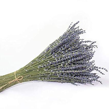 OEM SYSTEMS Lungo orecchio Regno Unito blu lavanda naturale fiori secchi bouquet Flores decorativo composizioni floreali arredamento viola 50g/g/g, purple, 0.12lb (50g) Xinjiang