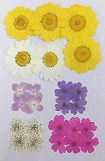09ac2ed4540 Amazon.co.jp: 押し花素材(押し花パック) パンジーミックス25枚 ...