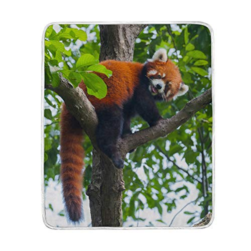 My Little Nest Flannel Fleece Microfiber Cozy Throw Blanket Red Panda Lightweight Soft Warm Blankets for Bed Couch Sofa Folding Camping Cot Everyday Use 50x60