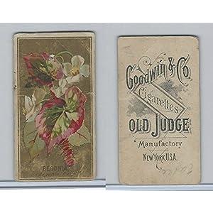 N164 Goodwin Cigarettes, Flowers, 1890, Begonia 33