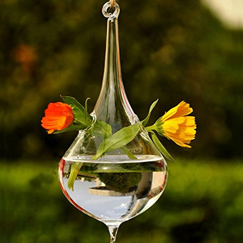 Money coming shop Clear Water Drop Glass Hanging Vase Bottle Terrarium Hydroponic Plant Flower DIY Table Wedding Garden Decor