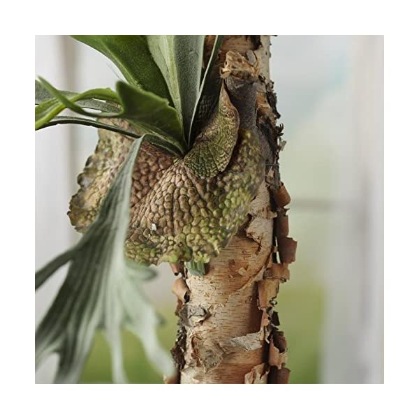 Artificial-Green-Staghorn-Fern-for-Floral-and-Home-Decor