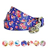 Blueberry Pet Durable Spring Scent Inspired Rose Print Irish Blue Dog Leash 5 ft x 5/8', Small, Leashes for Dogs