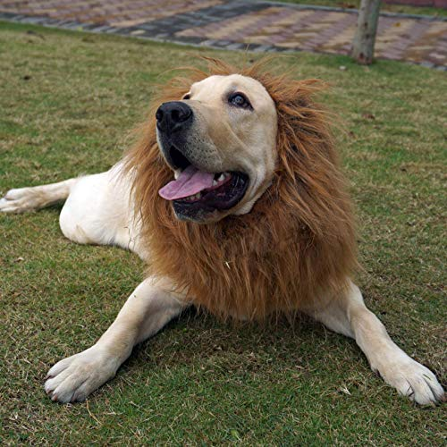MagiqueW Lion Mane for Dog, Lion Mane Wig Costumes,Fancy Lion Hair for Holiday Dress up Cosplay Festival Party Gift, Suitable for Medium and Large Dogs-Dark Brown (Eared&Tail)