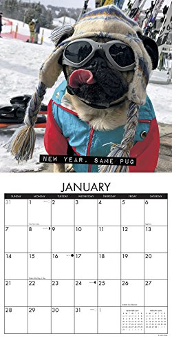 doug the pug calendar 2017 doug the pug 2018 wall calendar dog breed calendar 7961