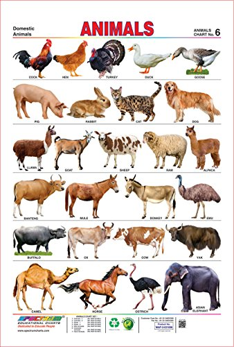 Spectrum Laminated Educational Pre - School Kids Domestic Animals Name Wall Chart