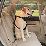Kurgo Direct To Seatbelt Tether for Dogs