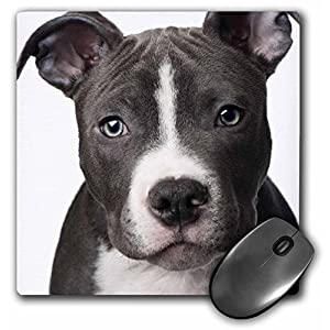 3dRose LLC 8 x 8 x 0.25 Inches Mouse Pad, American Pit Bull Terrier Puppy (mp_4240_1) 15